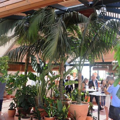 Julio2015 El hotel Palace da vida a Diana, un gran jardín romántico en su azotea. Foto: Montse Carreño.