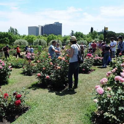 10MAYO2015 15º Concurso Internacional de Roses Nuevas de Barcelona. Foto: Montse Carreño.