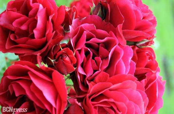 13ª edición Concurso Roses Noves